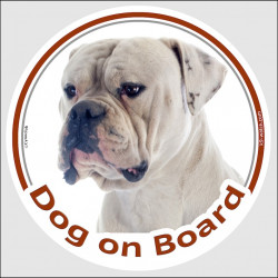 "Circle sticker ""Dog on board"" 15 cm, White American Bulldog Head, decal adhesive car label southern old english hill country"