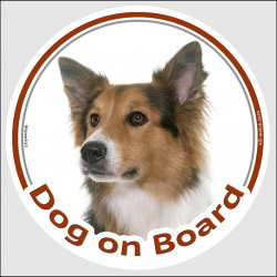 "Circle sticker ""Dog on board"" 15 cm, Tricolor Border Collie Head, decal adhesive car label tricolour"