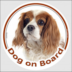 "Circle sticker ""Dog on board"" 15 cm, Blenheim Cavalier King Charles Spaniel Head, decal adhesive car label, white and brown"