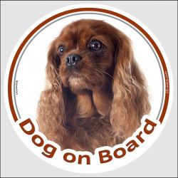 "Circle sticker ""Dog on board"" 15 cm, Ruby Cavalier King Charles Spaniel Head, decal adhesive car label red brown"