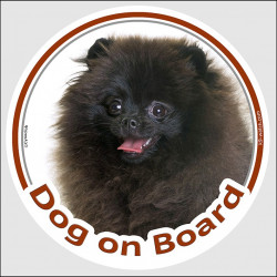"Circle sticker ""Dog on board"" 15 cm, Black Pomeranian Head, deutsche spitz decal adhesive car label pom"
