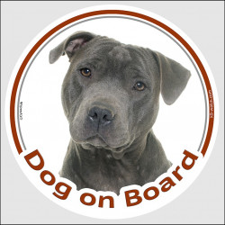 "Circle sticker ""Dog on board"" 15 cm, grey blue Staffie Head, decal adhesive car label Staffordshire Bull Terrier"