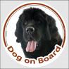 """Circle sticker """"Dog on board"""" 15 cm, black Newfoundland Head decal adhesive car label"""