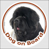 """Circle sticker """"Dog on board"""" 15 cm, black and white Newfoundland Head decal adhesive car label"""