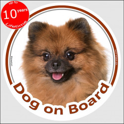 "Circle sticker ""Dog on board"" 15 cm, Orange Pomeranian Head, adhesive decal label pom red fawn"