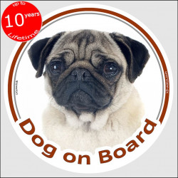 "Circle sticker ""Dog on board"" 15 cm, fawn Pug Head, decal adhesive car label"
