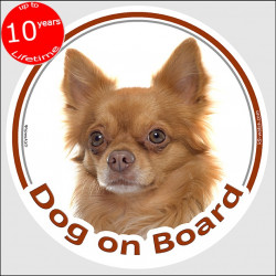 "Circle sticker ""Dog on board"" 15 cm, red long hair Chihuahua, car label, decal adhesive fawn orange"