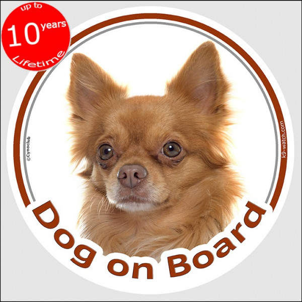 """Circle sticker """"Dog on board"""" 15 cm, red long hair Chihuahua, car label, decal adhesive fawn orange"""