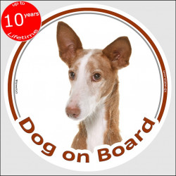 "Podenco Canario , circle sticker ""Dog on board"" 15 cm, car decal label adhesive, Canary Island Warren Hound dog photo"