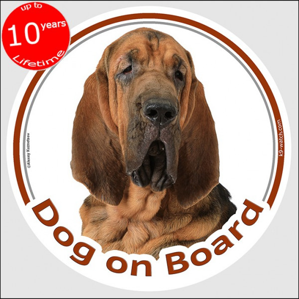 "Bloodhound, circle sticker ""Dog on board"" 15 cm, car decal label adhesive st hubert hound"