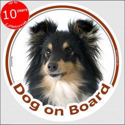 "Shetland Sheepdog tricolour, circle sticker ""Dog on board"" 15 cm, car decal label, Tricolor Sheltie black and Tan"