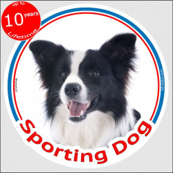 "Black and white long hair Border Collie, circle car sticker In/Out ""Sporting Dog"" 15 cm decal label notice sport agility"