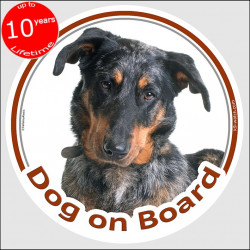 "Harlequin Beauceron, circle sticker ""Dog on board"" 15 cm, car decal label, merle photo notice merle shepherd french sheep adhesi"