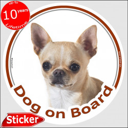"Fawn Creme short hair Chihuahua, circle sticker ""Dog on board"" 15 cm, car decal label photo notice adhesive"