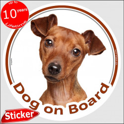"fawn orange Solid red Pinscher, circle sticker ""Dog on board"" 15 cm, car decal label adhesive photo notice"
