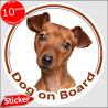 "Solid red Pinscher, circle sticker ""Dog on board"" 15 cm, car decal label"
