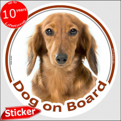 "Red long-haired Dachshund, circle sticker ""Dog on board"" 15 cm, decal adhesive photo notice fawn Doxie"
