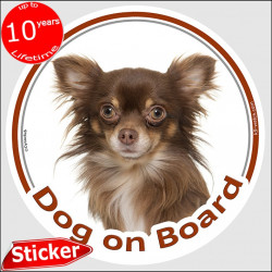 "Chocolate long hair Chihuahua, circle sticker ""Dog on board"" 15 cm, car photo notice decal label adhesive"