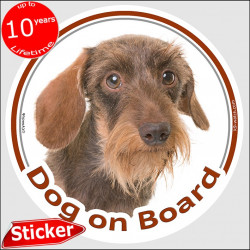 "Circle sticker ""Dog on board"" 15 cm, red wirehaired Dachshund Head, decal adhesive car label fawn orange doxie photo"