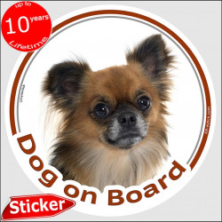 "Fawn brown long hair Chihuahua, circle sticker ""Dog on board"" 15 cm, car decal label adhesive photo notice"