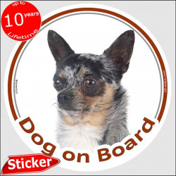 "Merle short hair Chihuahua, circle sticker ""Dog on board"" 15 cm, car decal label adhesive photo notice Arlequin"