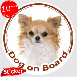 "Gold & white long hair Chihuahua, circle sticker ""Dog on board"" 15 cm, car decal label adhesive photo notice"
