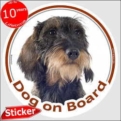 "Circle sticker ""Dog on board"" 15 cm, wild-boar wirehaired Dachshund Head, decal adhesive car label fawn orange doxie photo"