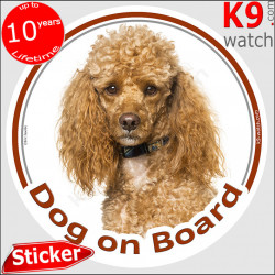 """Orange Apricot Poodle Head, circle sticker """"Dog on board"""" decal adhesive car label photo notice, Red fawn brow hairs colors"""