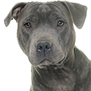 S19 Staffie ©Cyno.png